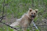Невероятная собака Лизонька ищет семью