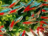 Аквариумная рыба более 30 видов оптом и в розницу